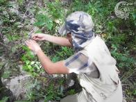 Preparación del material de captura de lagartijas.